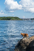Audun and Veera's dog loves to swim and play fetch.
