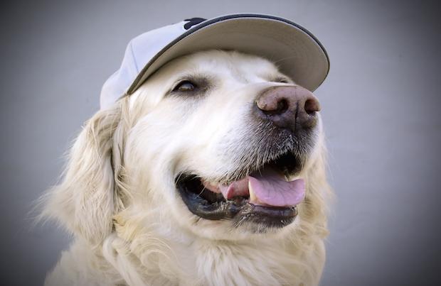 Dog at a baseball game
