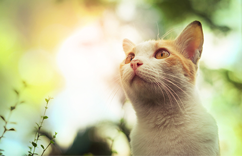 Cat Behavior: Why Do Cats Rub Against You?