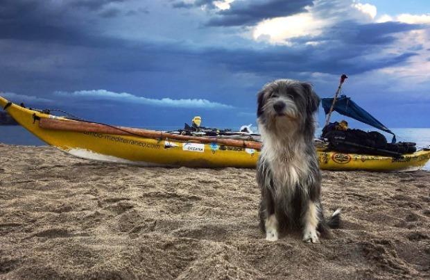 Nirvana the dog sitting on a beach