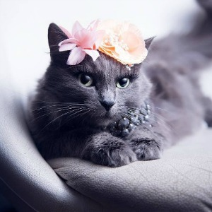 Pitzush the cat modeling floral fashion