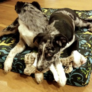 Two dogs sleeping in a homemade pet bed