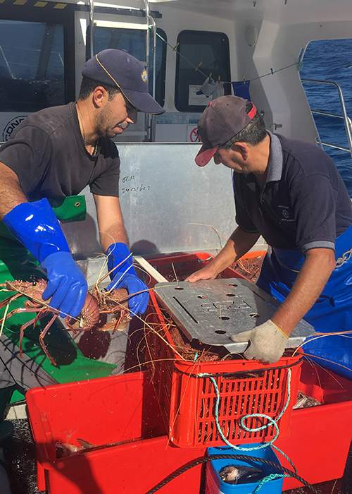 James and his father Joe Paratore harvesting lobster © MSC