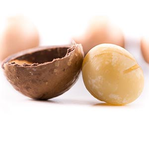 macadamia nuts and dogs