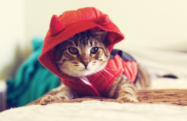 Cat in a Halloween costume