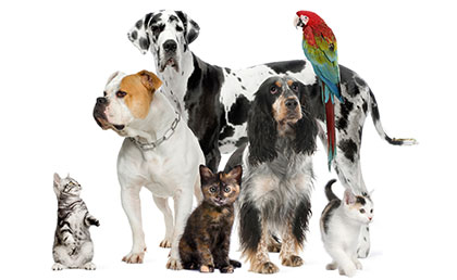 pet health supplement
