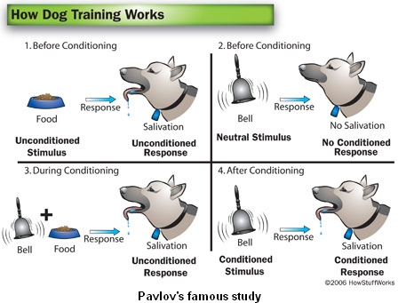 How Dog Training Works