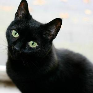 Pretty black cat by a window