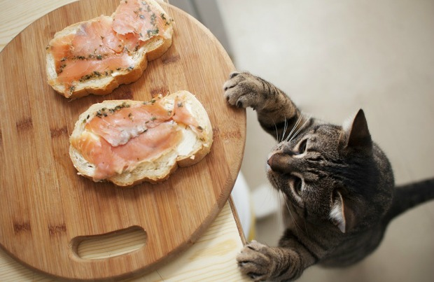 Cat reaching for food on table