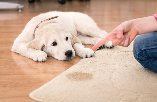 Dog vacation dangers: accidents