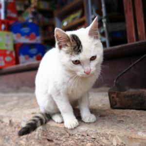 Bodega cat outside a store