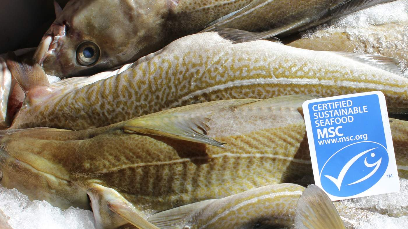 Iceland an olympic effort in sustainable fishing for What does sustainable fish mean