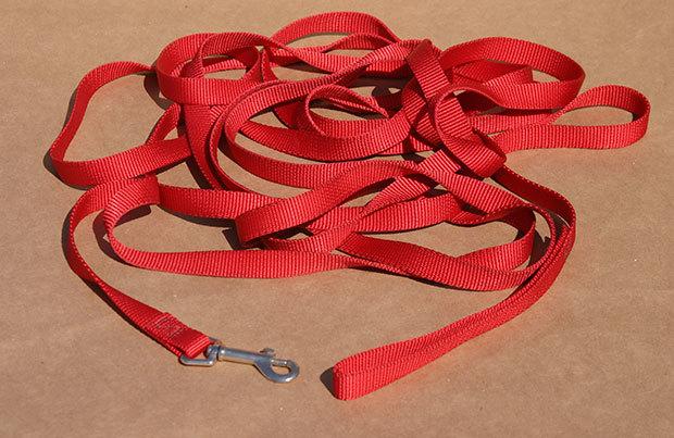 Dog-walking essentials: long leash