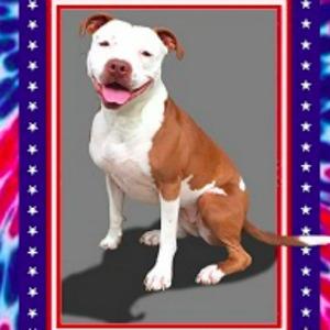 Dog mayor Brynneth Pawltrow