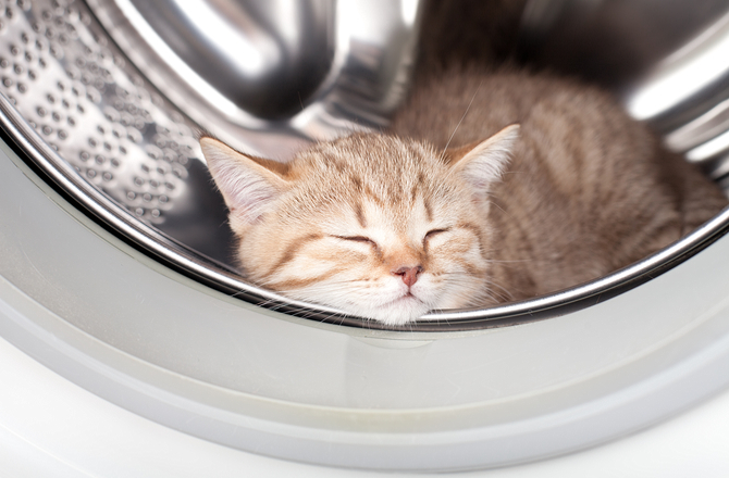 Cat hiding in washing machine