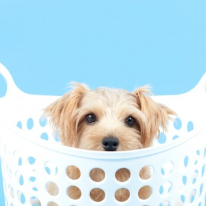 Dog in a Homemade DIY Box