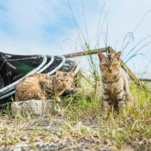 A cat on Ainoshima cat island