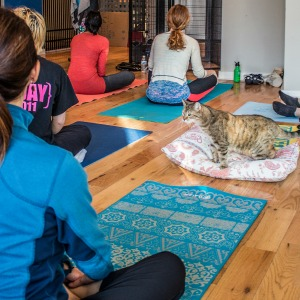 Cat yoga class in action