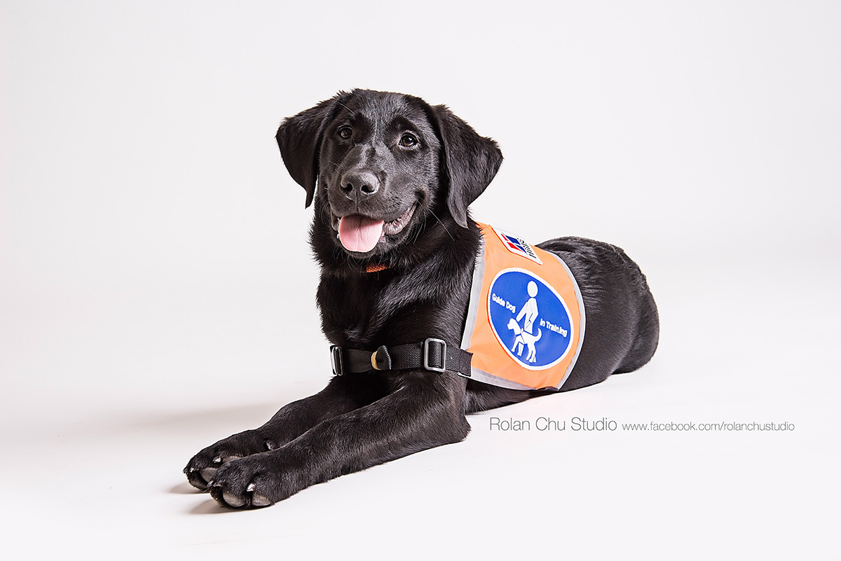 Charlie guide dog