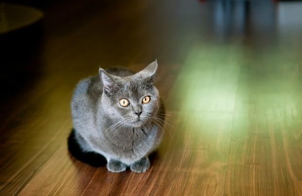 Cat looking guilty