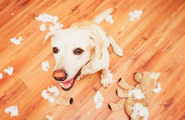 Dog vacation dangers: misbehaving