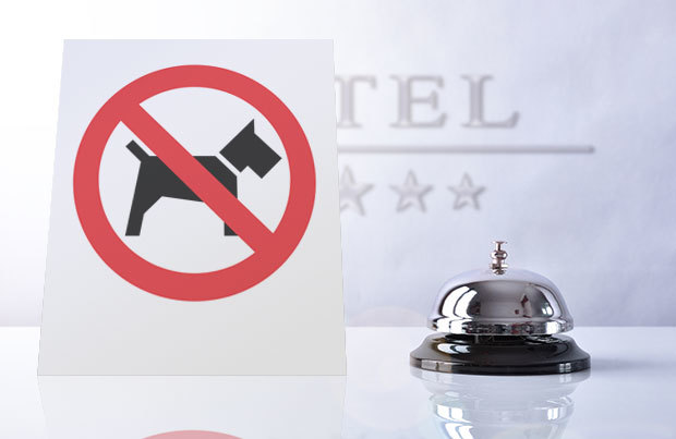 Dog vacation dangers: hotel