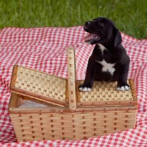 Puppy at a picnic.