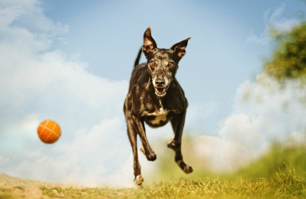 Eight ways to tire your dog out
