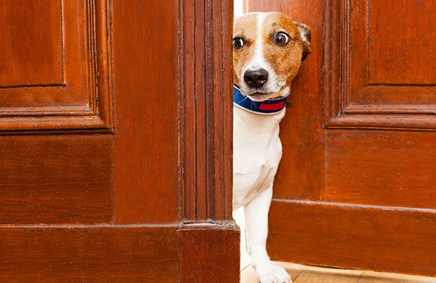 Dog vacation dangers: fear