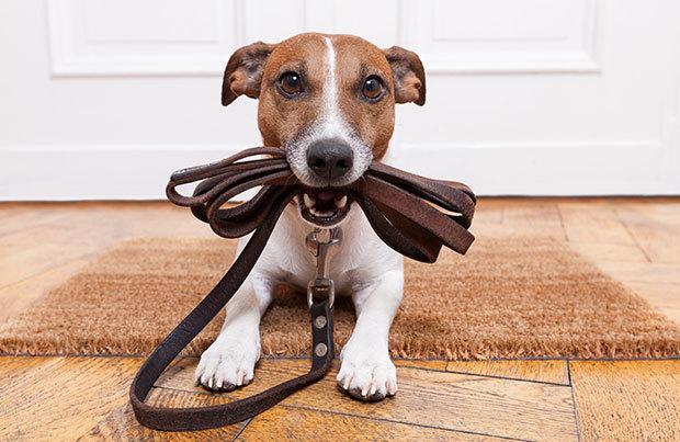 Dog-walking essentials: leash