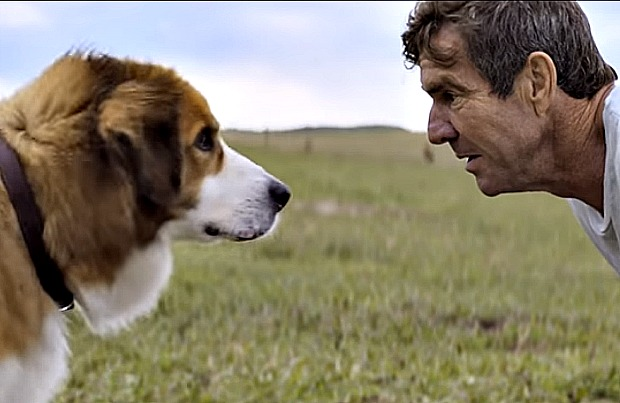 A clip from 'A Dog's Purpose'