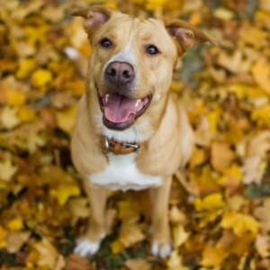 Dog and autumn leaves