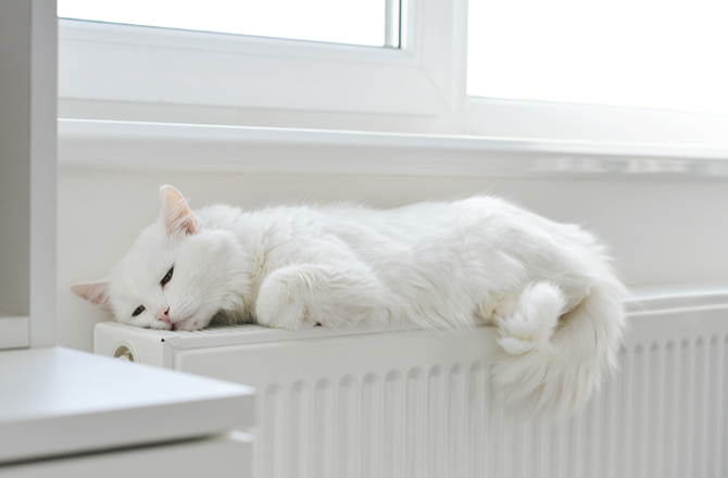 Cat on heating unit