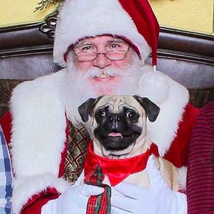 Puppy sits on Santa's lap