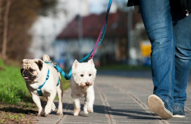 Dog-walking essentials