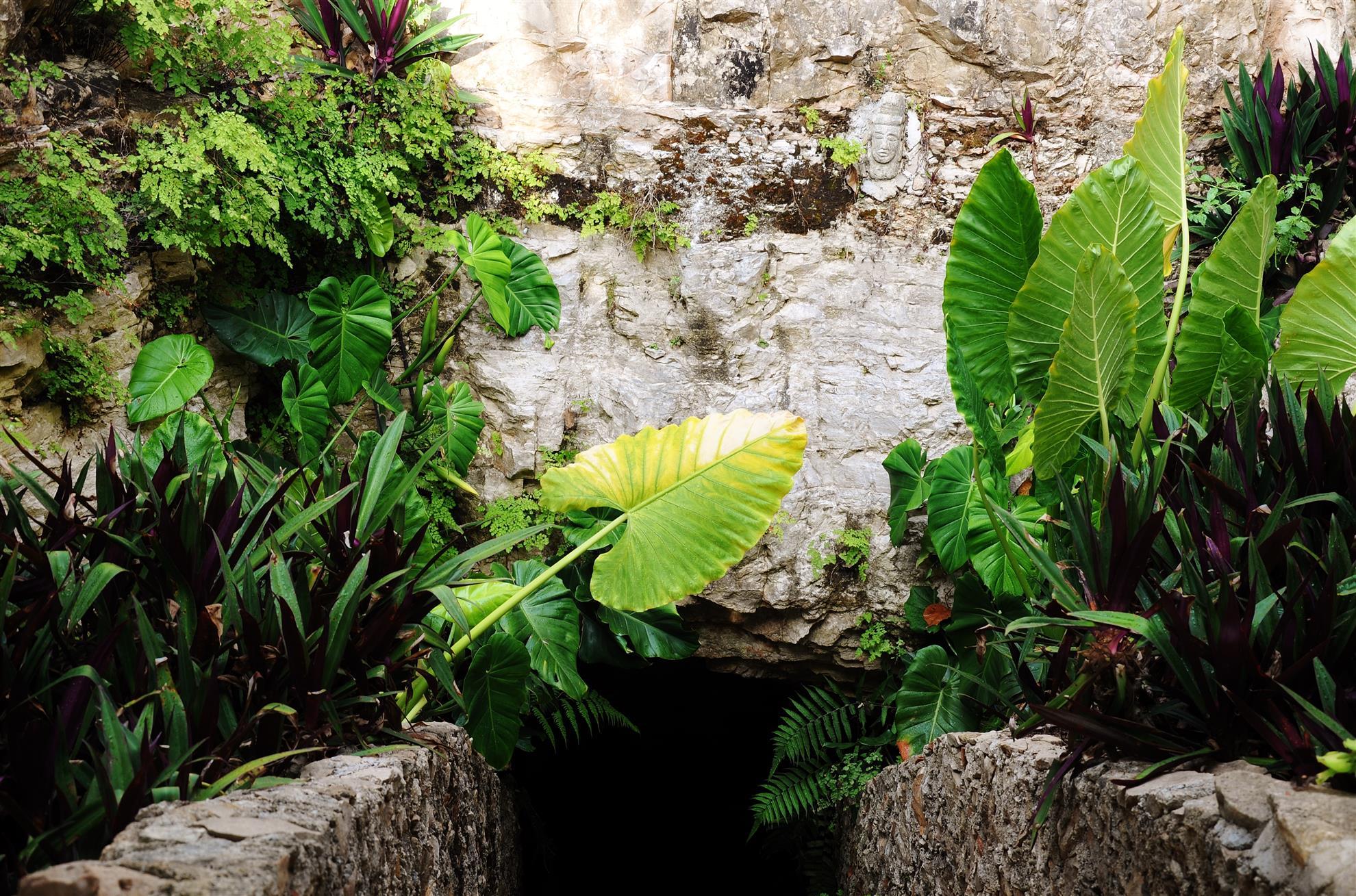 Cenote nachi cocom