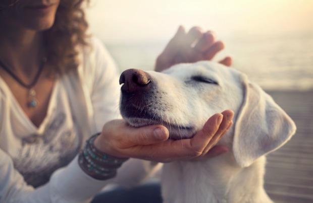 Woman petting dog affectionately