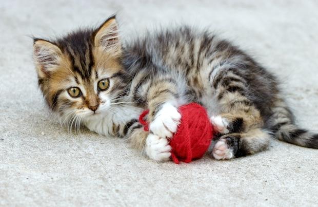 Hyper kitten playing