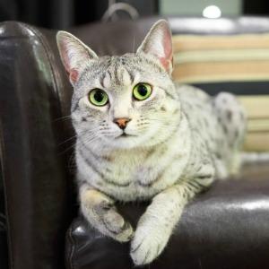 Cat sitting on leather sofa