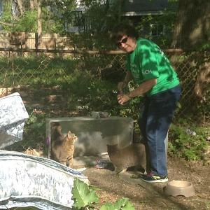 Millie Schafer rescuing feral cats