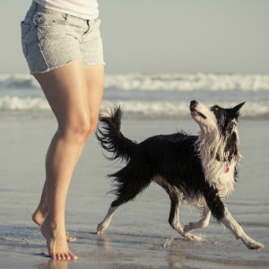 Dog at the beach with owner