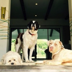 Colbie Caillat's three dogs