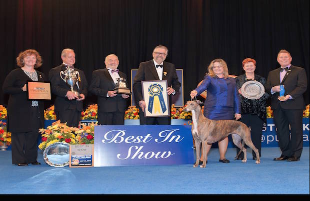 Gia wins Best in Show