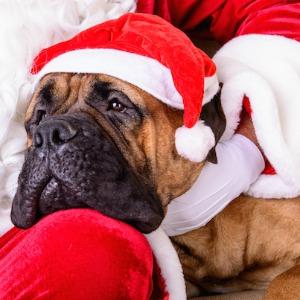 Dog visits Santa
