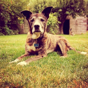 Decoding your dog's age