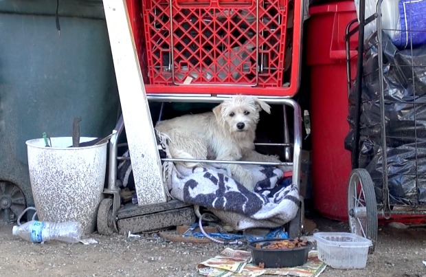 Homeless dog and her puppies saved by Rescue From the Hart