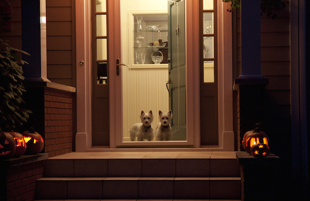 Dogs at Halloween.