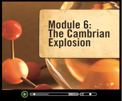 The Cambrian Explosion - Watch this short video clip
