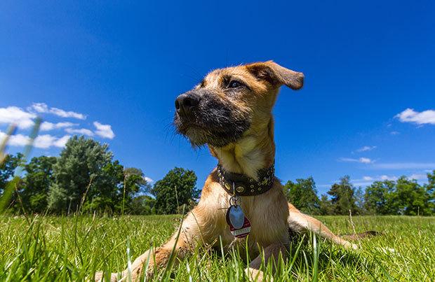 Dog-walking essentials: collar
