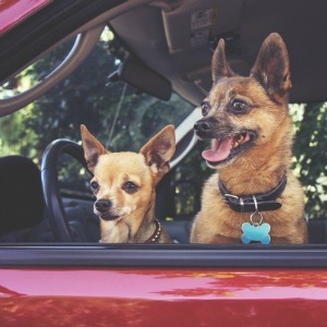 How to keep your car from smelling like a kennel